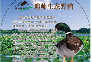 迪帅生态野鸭